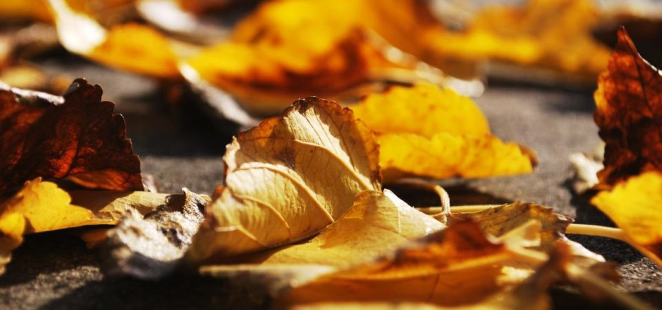 Umstandsmode für den Herbst