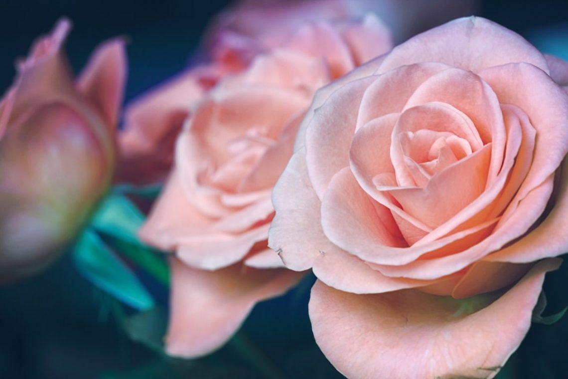 Blumen für die Schönheit