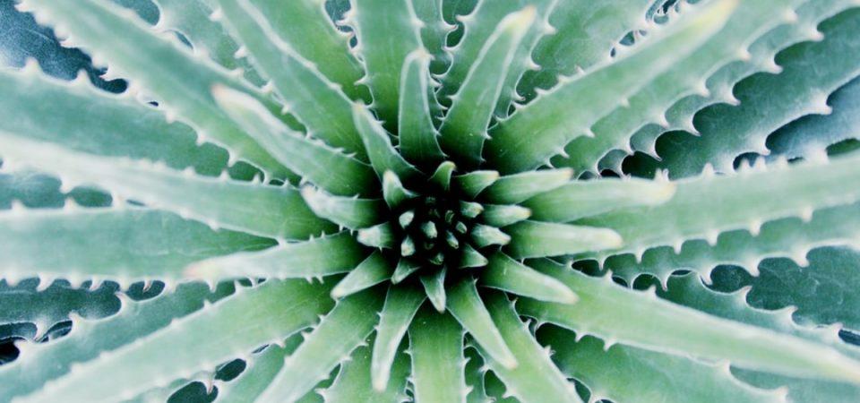 Biokosmetik – der Natur auf der Spur